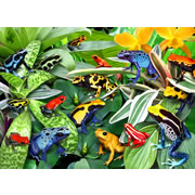 Friendly Frog Puzzle - 300 pieces