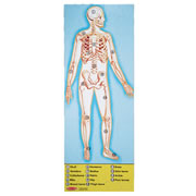 Melissa and Doug Human Body 100 pc Floor