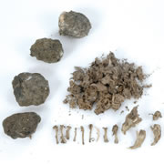 Owl Pellets (Set of 5)