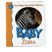 Baby Zebra (Board Book)