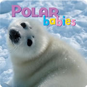 Polar Babies (Board Book)