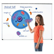 Giant Magnetic Animal Cell