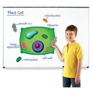 Giant Magnetic Plant Cell