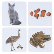 Real Image Animal Magnet Set