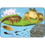 Giant Lifecycle Puzzle - Frog