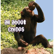 All About Chimps - Board Book