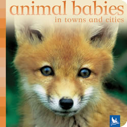Animal Babies in Towns - Board Book