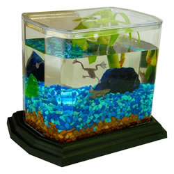 Wild Creations EcoAquarium  All In One Kit