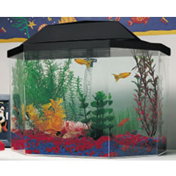 5 Gallon Aquarium System