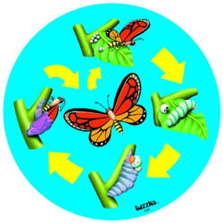 Lifecycle Butterfly Puzzle