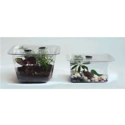 Set of Terrariums or Aquariums