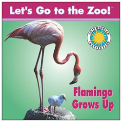 Flamingo Grows Up - Board Book