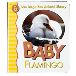 Baby Flamingo (Board Book)