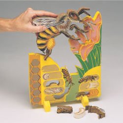 Bee Lifecycle Puzzle