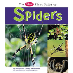 First Guide to Spiders - Paperback