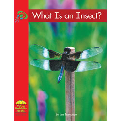 What Is an Insect? - Paperback