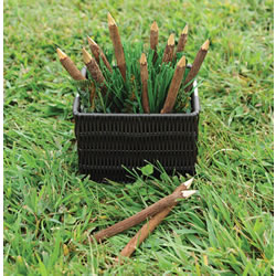 Twig Pencils - Set of 12