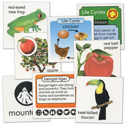 Life Science Pocket Chart Cards