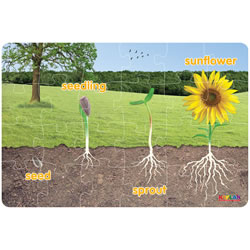 Sunflower Life Cycle Floor Puzzle
