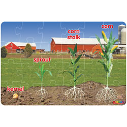 Corn Life Cycle Floor Puzzle