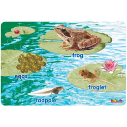 Frog Life Cycle Floor Puzzle