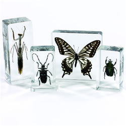 Insect Specimen Set