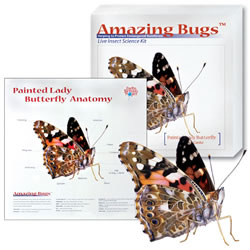 Amazing Bugs-Butterfly