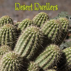 Desert Dwellers - Board Book