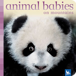 Animal Babies on Mountains - Board Book