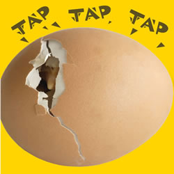 Tap, Tap, Tap, What's Hatching? - Board Book