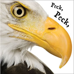 Peck, Peck, Peck - Board Book