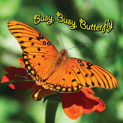 Busy Busy Butterfly - Board Book