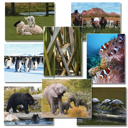 Jumbo Language Cards - Animals