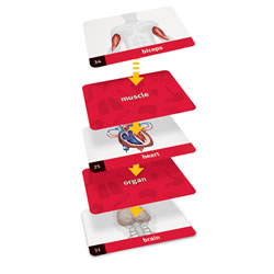 Linkology™ Human Body Card Game