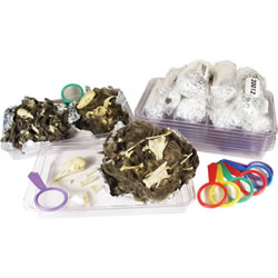 Skeleton Pellet Classroom Kit