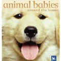 Animal Babies Around the House - Board Book