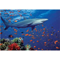 Shark Jigsaw 100 Piece Puzzle