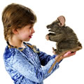 Brown Mouse Hand Puppet by Folkmanis