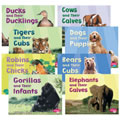 Animals And Their Babies Book Set (Set of 8)