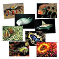 Sea Life Posters (Set of 8)