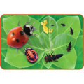Giant Lifecycle Puzzle - Ladybug