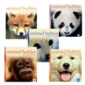Animal Babies Board Book Set (Set of 5)