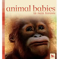 Animal Babies in Rain Forests - Board Book