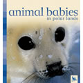 Animal Babies in Polar Lands - Board Book