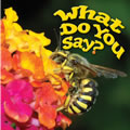 What Do You Say? - Board Book