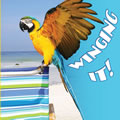 Winging It! - Board Book