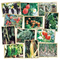 Fresh Fruit and Vegetable Puzzle Set (Set of 12)