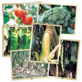 Fresh Vegetables Puzzle Set (Set of 6)