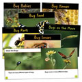 Comparing Bugs Book Set - Spanish (Set of 6)